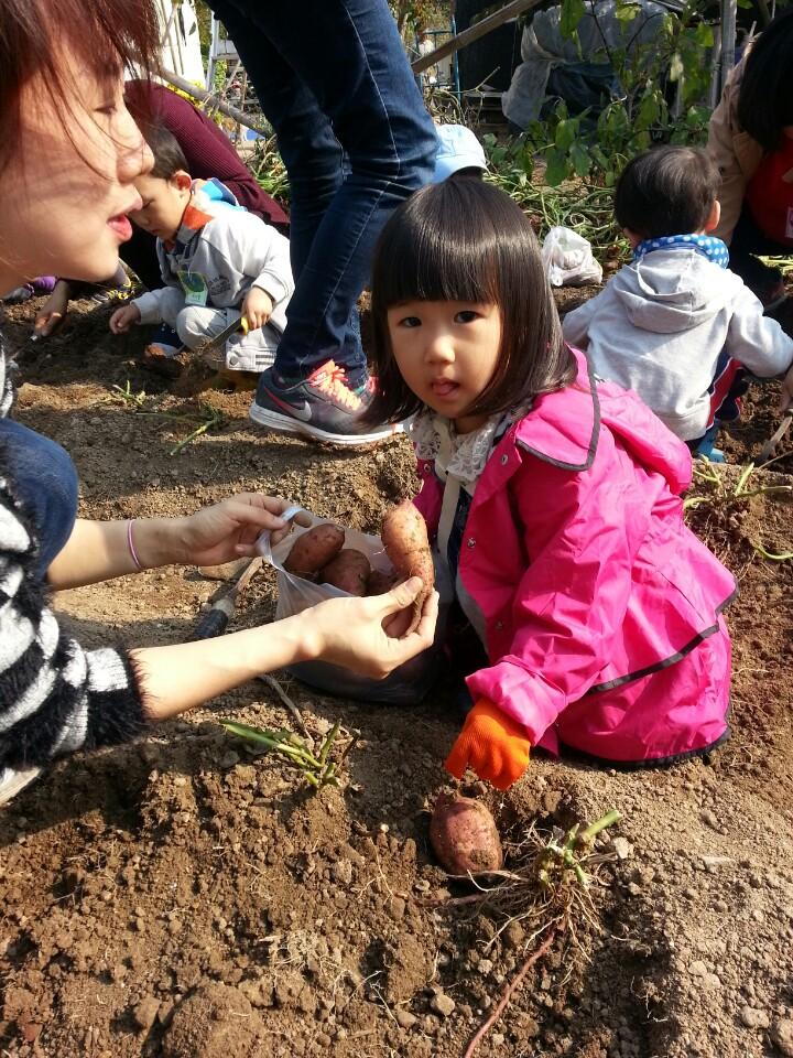 땅속식물 고구마도 캐고5.jpg
