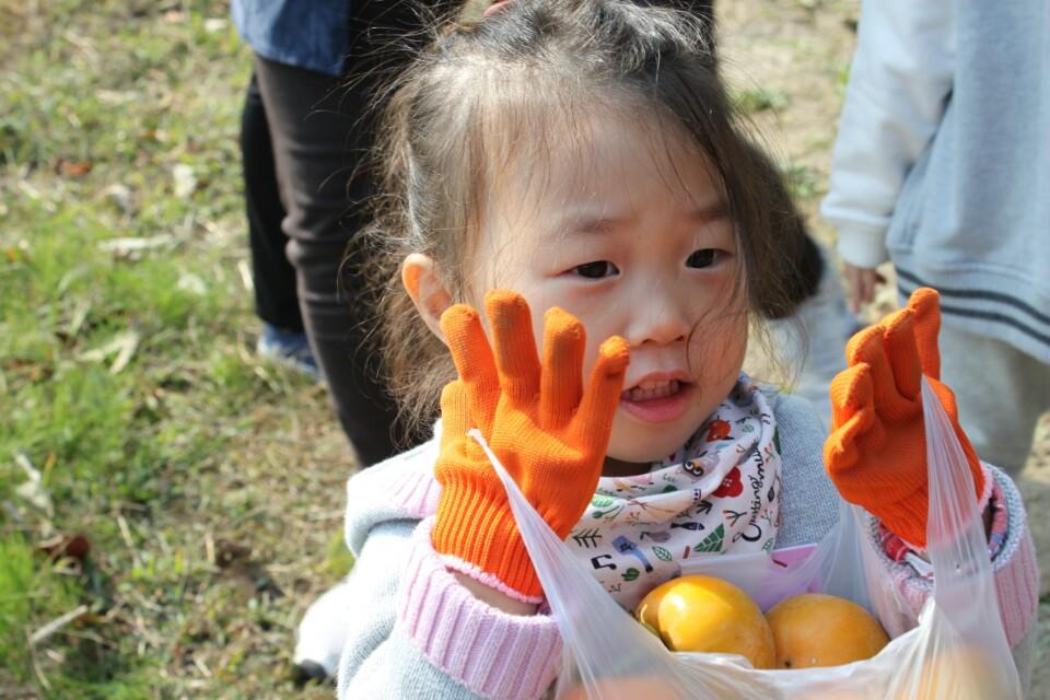 과실수 열매 감도따고1.jpg